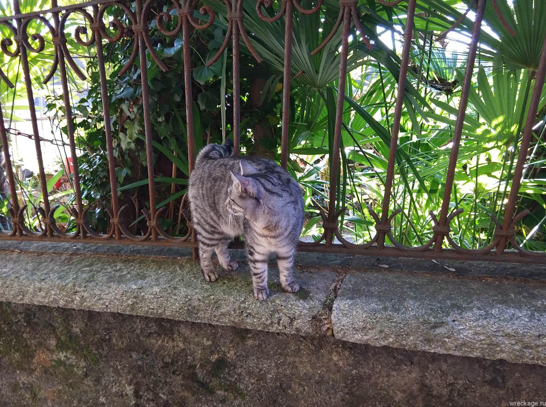 дикий кот в европе