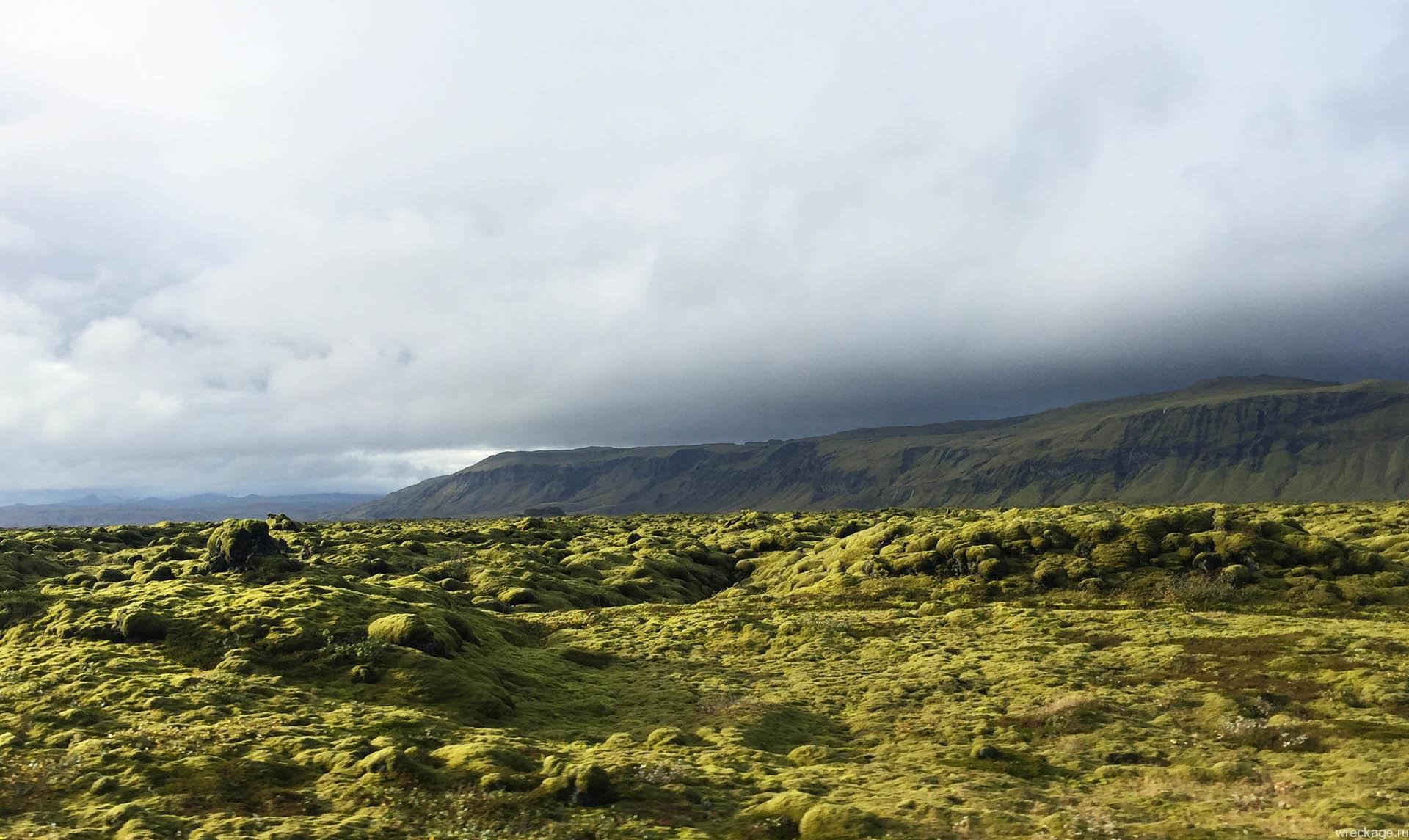 мох на вулканической лаве в исландии