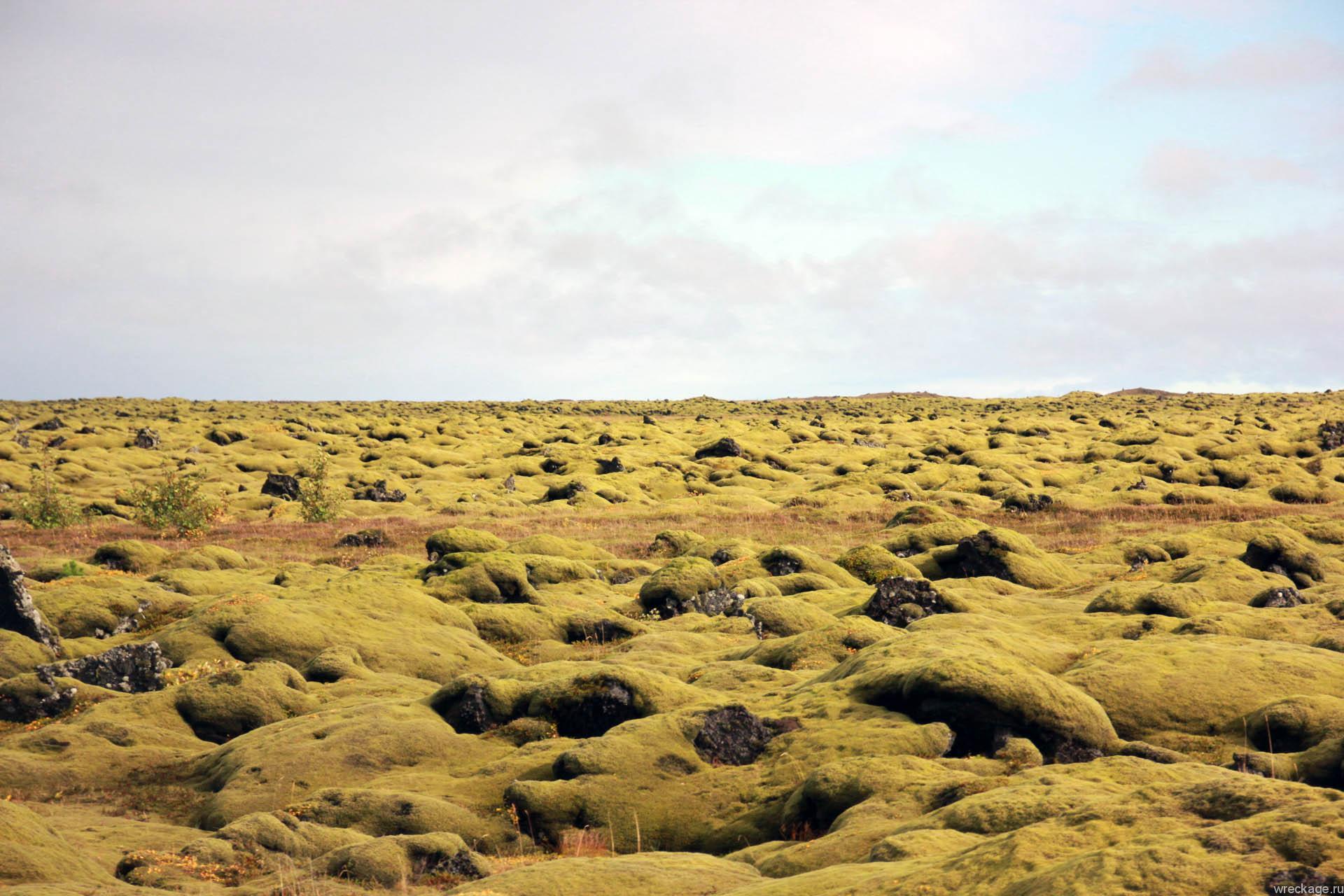 мох около дороги в исландии
