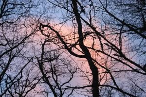 Деревья в лесу крыма