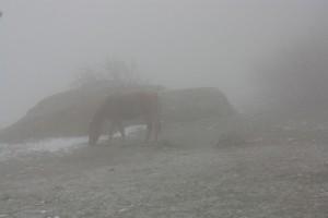 туман демерджи лошадь