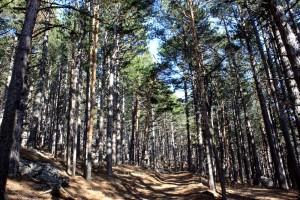 лес в крыму
