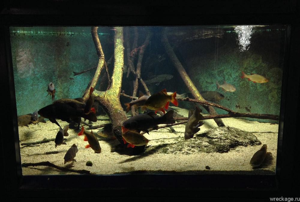 аквариум в доме моря