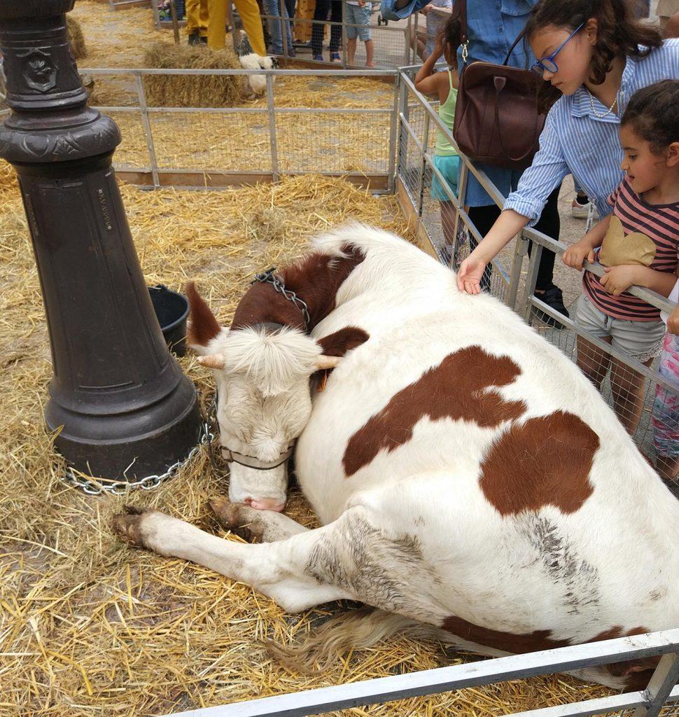корова на блошином рынке парижа